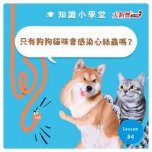 只有狗狗和貓咪會感染心絲蟲嗎?