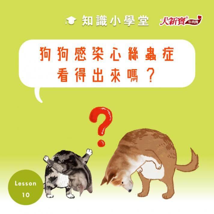 狗狗感染心絲蟲症看得出來嗎?