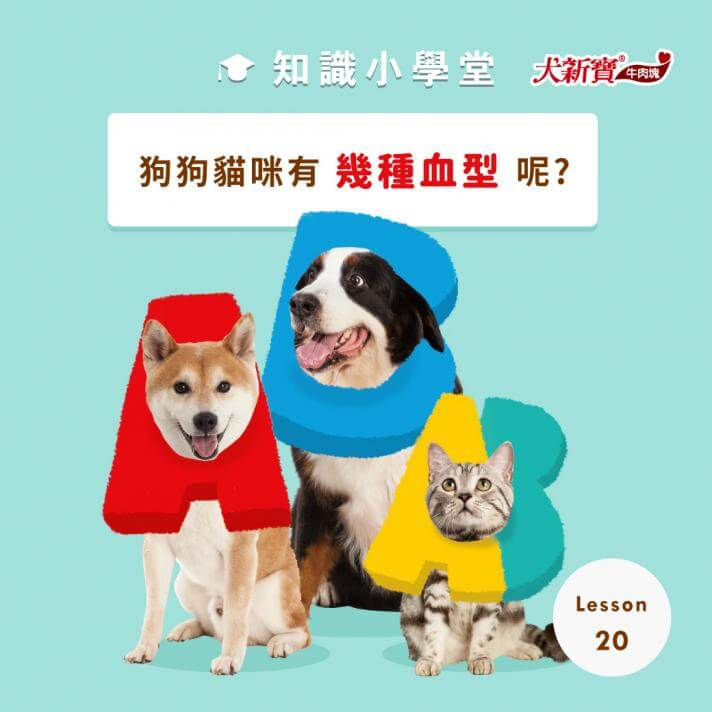 狗狗和貓咪有幾種血型呢?