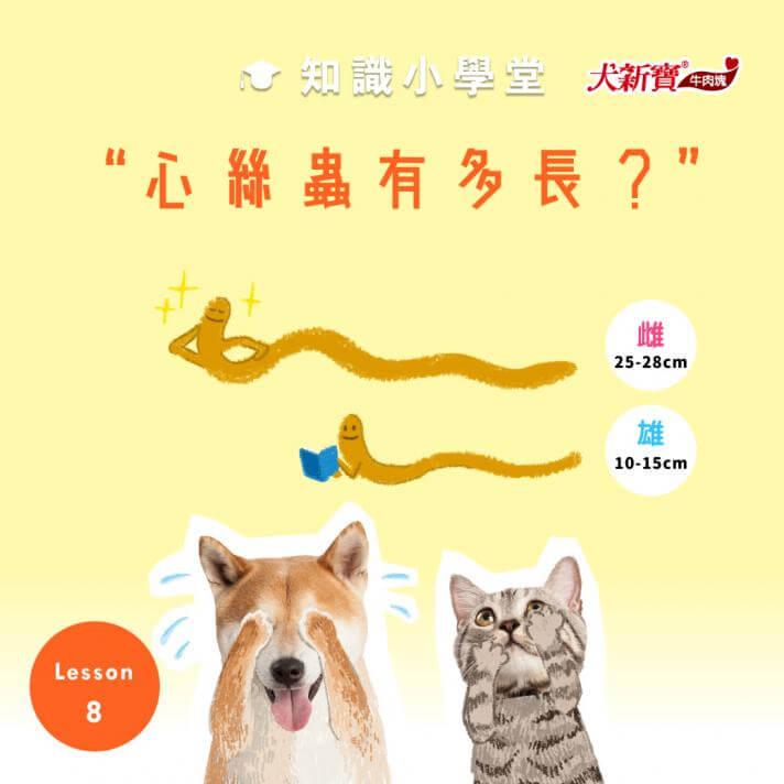 寄生在狗貓心臟裡的心絲蟲,到底有多長呢?